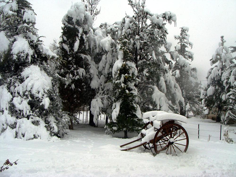 El pinar y el sulky, Los Zorzales. Foto: Ana Vogel